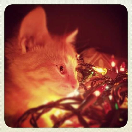 Creative Light And Shadow Kitty Christmas Lights Warmth Amazement And Wonderment