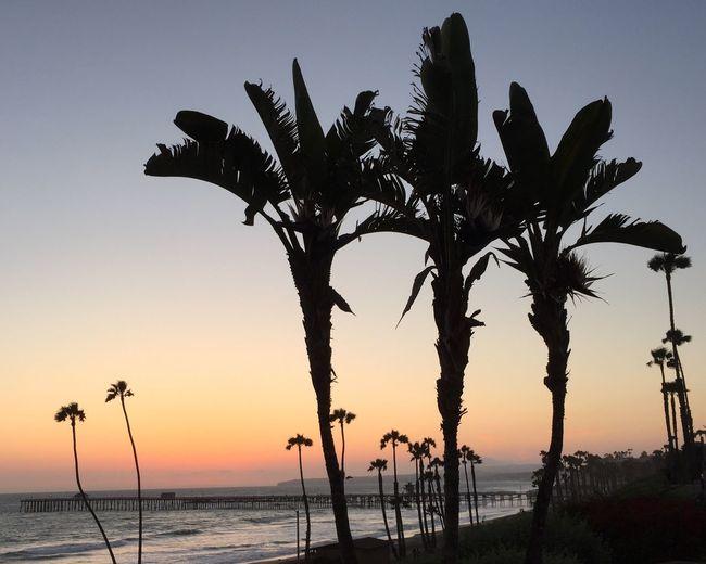 Beachtownlife