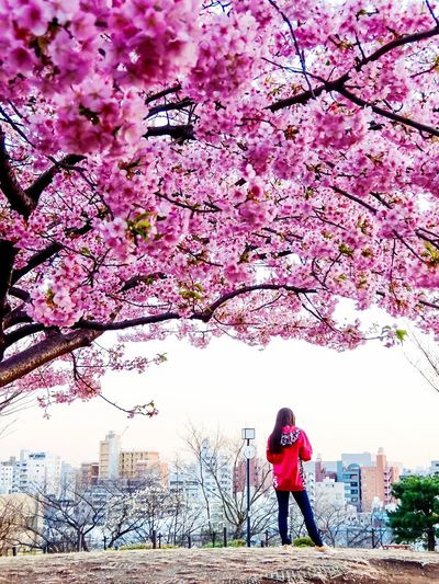 City life Cherry Blossom Tree Blossom Flower Cherry Tree Springtime Pink Color Branch Fragility Beauty In Nature One Person Growth Full Length Nature Outdoors City Park - Man Made Space Freshness Day Sky Tokyo Street Photography Tokyo Daikanyama