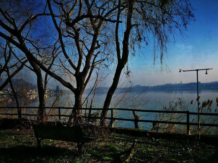 Autumn Trees on the Lake