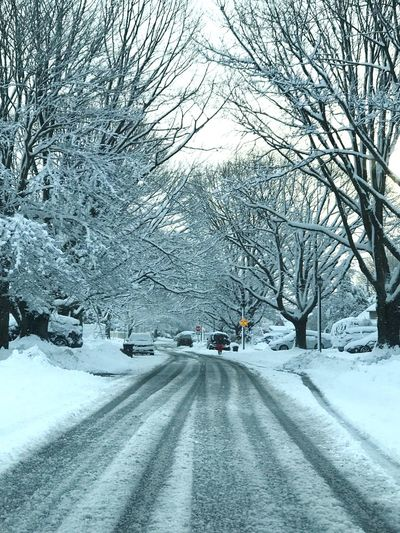 Morning snow , east coast, New York, Long Island Winter Snow Longisland Newyork Americanwinter Suburb Snow Snow Winter Cold Temperature Transportation Road Tree Car The Way Forward Nature Covering Outdoors White Color Day