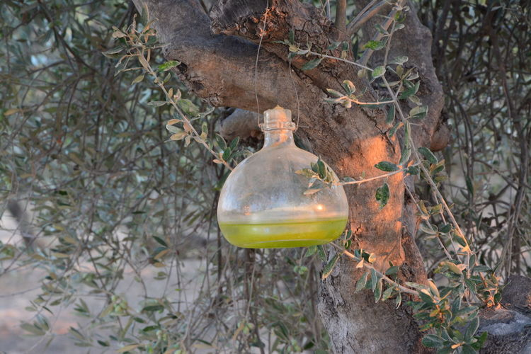Bottles Collection Close-up Day Nature Photography Oil Olive Tree Select VIRGIN OIL