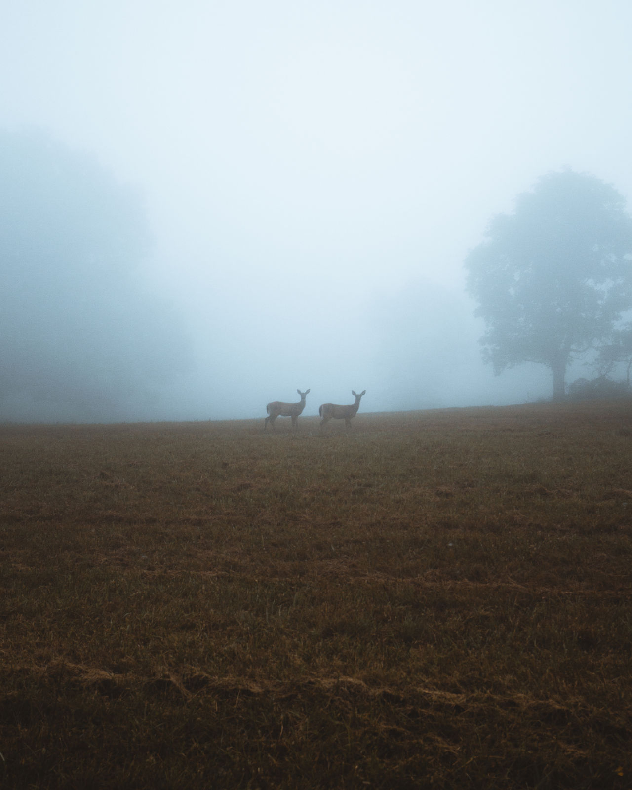 fog, field, land, environment, sky