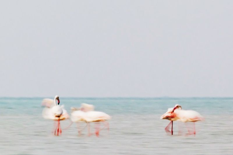 Flamingo Walk Water Sea Animal Themes Bird Animal Group Of Animals My Best Photo Vertebrate Nature Animals In The Wild Flamingo Animal Wildlife No People Pink Color Beach Day Land Beauty In Nature Sky Copy Space Outdoors