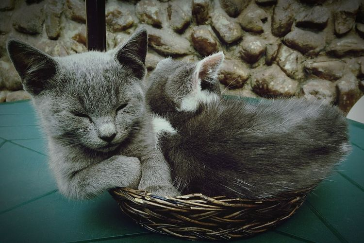 Hanging Out Relaxing Cats Cat Lovers Catfamily CatBasket Cat♡ Enjoying Life