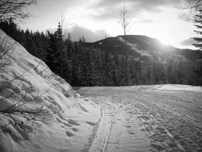 'Sunset and Snow' Freezing Beauty In Nature Canada Cold Temperature Day Fresh Landscape Mountain Nature No People Outdoors Scenics Sky Snow Snow Scene  Snowy Sunlight Sunset Tire Track Tracks Tracks In The Snow Tranquil Scene Tranquility Tree Winter