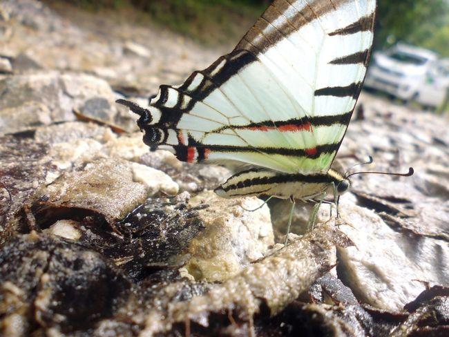 Mariposa En La Naturaleza Animal Themes One Animal Animal Wildlife Insect Close-up Nature Day