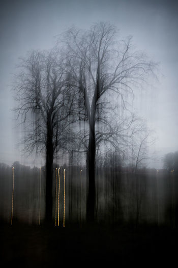 Bare trees in forest against sky at dusk