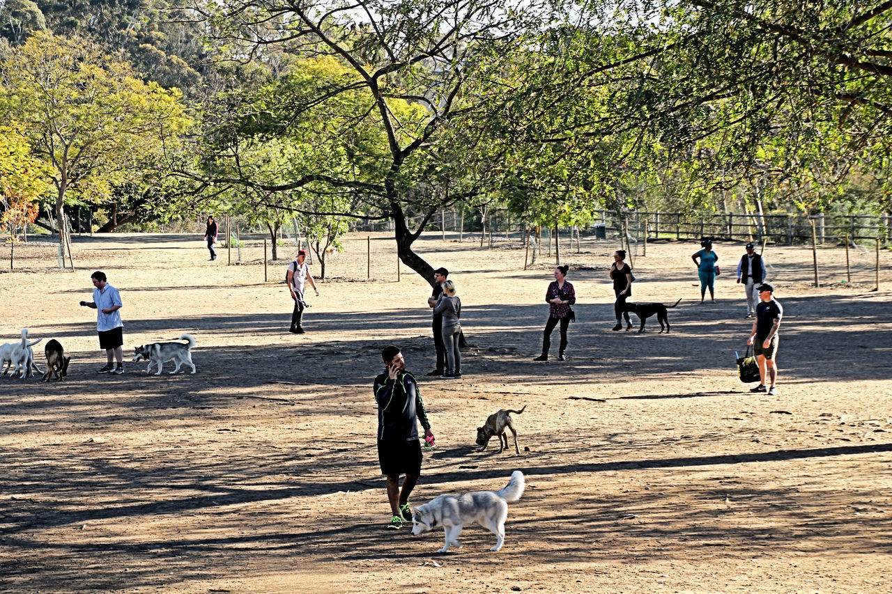 dog, pets, tree, togetherness, domestic animals, outdoors, walking, animal themes, nature, playing, full length, day, child, childhood, people, adult, mammal, only men