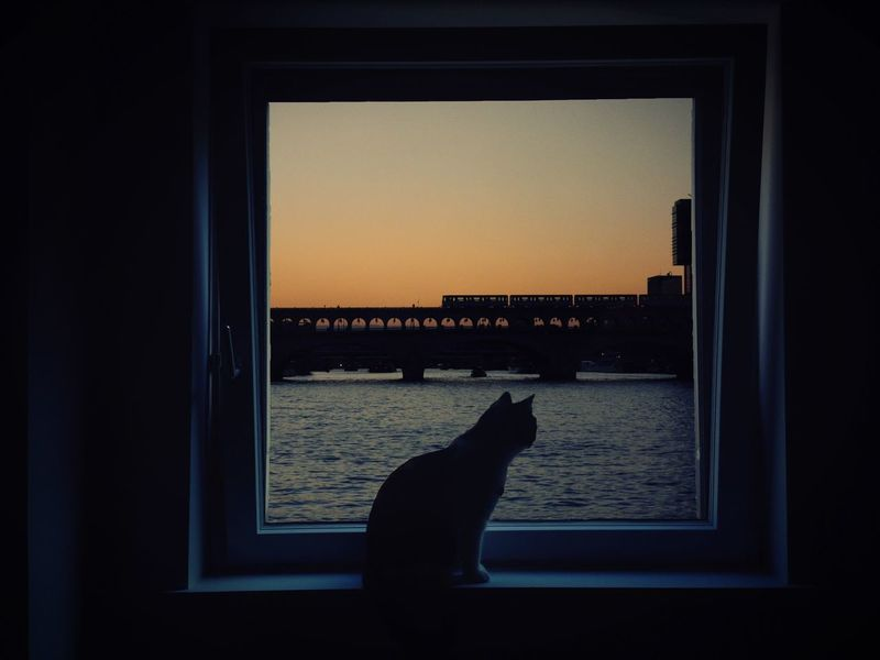 Cities At Night Sunset/Seine Sunset Seine Paris Metro Bridge Colors Cat Pet Animal Animal Themes Silhouettes Silhouettes Of A City Darkness Darkness And Light Sky Window Window View Window Sill Feline Pets Domestic Cat Square City Night