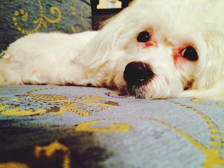 My Little Puppy Willy Dog Love
