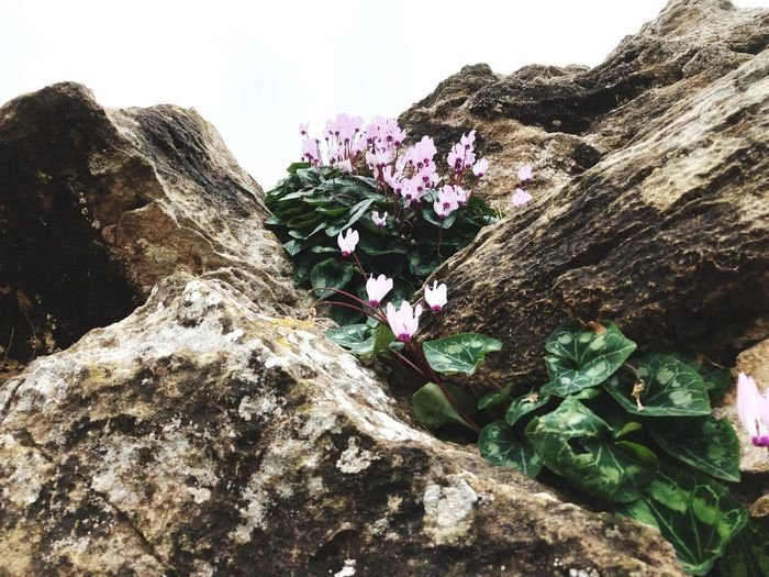 Flowers on rock