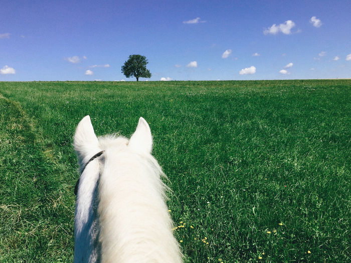 Adventures Blue Sky Domestic Animals Go Ahead Grass Green Fields Horizon Over Land Horse Horse Photography  Horse Riding Horseback Move Forward One Tree Pony Riding Rural Scene Summer Summer Adventures The Way Forward Tranquil Scene White Horse TakeoverContrast