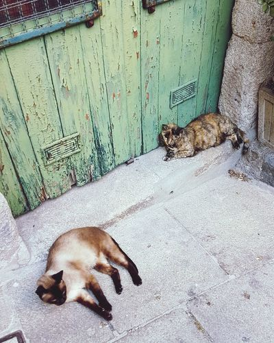 Two Cats Animal Themes Mammal One Animal High Angle View Animals In The Wild Day Animal Wildlife No People Relaxation Outdoors Domestic Animals Pets Nature Close-up Two Cats On The Floor Cats Cats Of EyeEm Portugal Porto Portugal 🇵🇹 Porto Visual Creativity Adventures In The City The Street Photographer - 2018 EyeEm Awards Summer Road Tripping The Traveler - 2018 EyeEm Awards