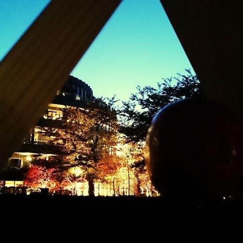 Date Night Photography Park Tokyo Japan Midtown Tokyomidtown Holiday♡ AndroidPhotography Smartphonephotography