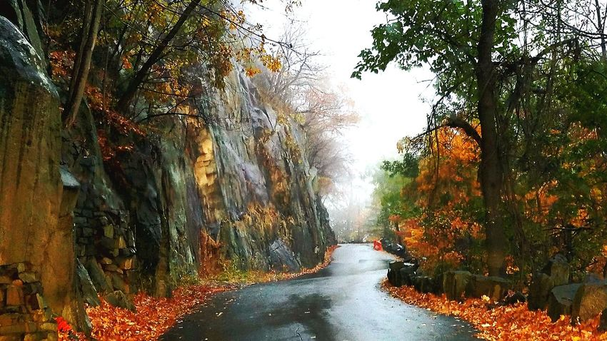 Palisades State Park In The Woods Water Tree Nature Waterfall No People Outdoors Autumn Day Leaf Beauty In Nature Scenics Forest Fog Flood Fall Colors Fall Beauty Shades Of Winter
