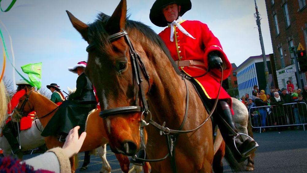 Horse Horse And Rider Historic Celebration Ireland Eyemphotography EyeEm Best Shots Sun EyeEmBestPics EyeEm Gallery