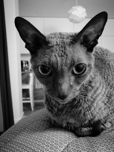 Evil Cat Demon Eyes Looking At Camera