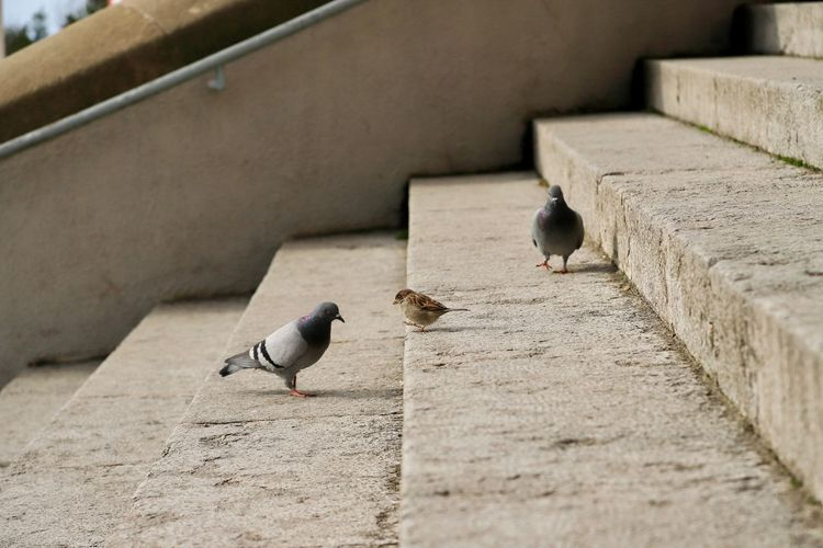 Pigeons perching on wall