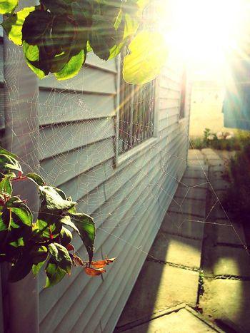 Las cosas pequeñas :) Relaxing Summer ☀ Telaraña Sol Elquisco Vacaciones Hello World That's Me Photography Photo♡