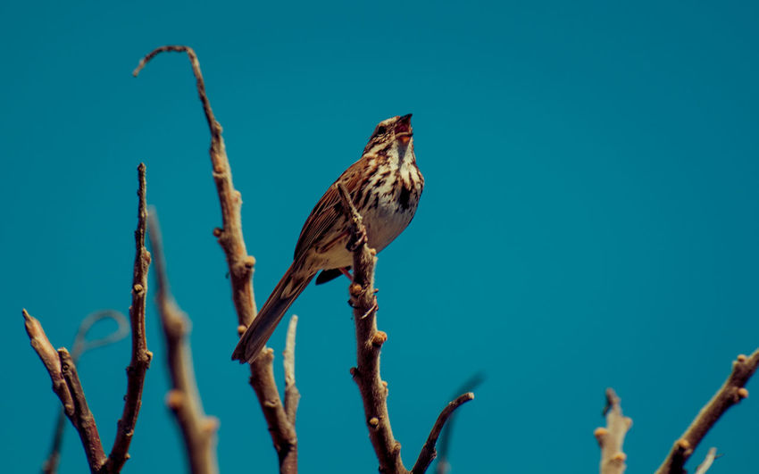 Animal Themes Animal Wildlife Animals In The Wild Beauty In Nature Bird Blue Sky Branch Clear Sky Close-up Day Dead Plant Dried Plant Growth Low Angle View Nature No People One Animal Outdoors Perching Plant Tommy Thompson Park The Great Outdoors - 2018 EyeEm Awards