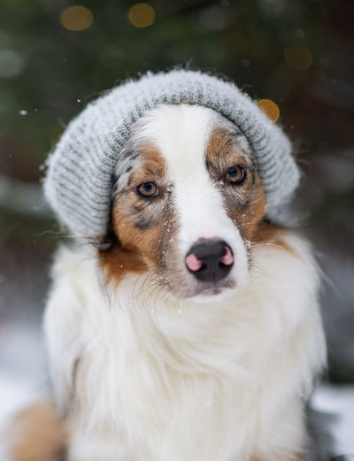 Close-up portrait of white dog outdoors during winter