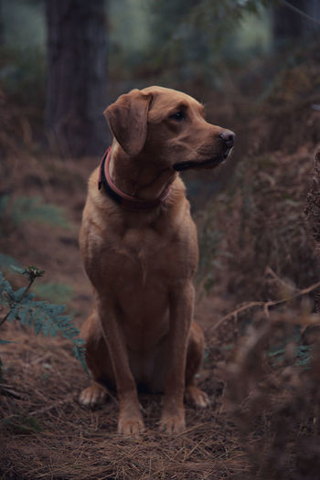 Dog sitting on land