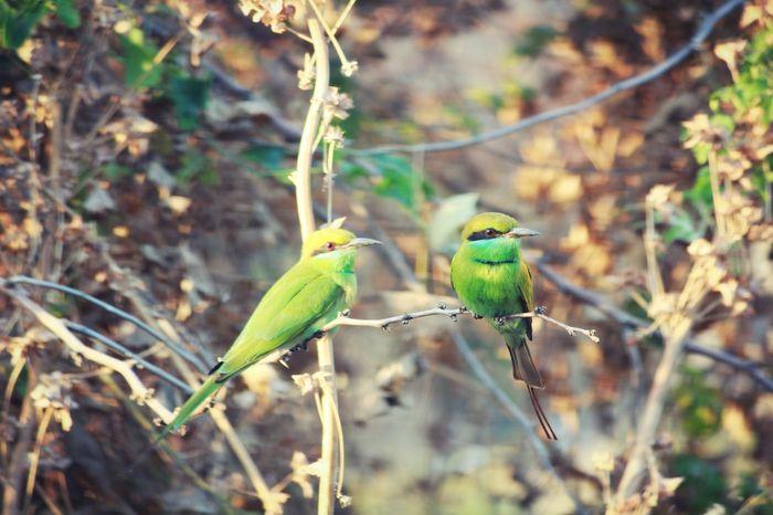 Nagpur India Maharashtra Nature Wildlife Outdoors Environment Feather  Beak Wing Park Beautiful Leaf Flora Tree Wood Closeup Tropical Wild EyeEm Selects Animal Wildlife Bird Animals In The Wild Animal Branch Perching Parrot