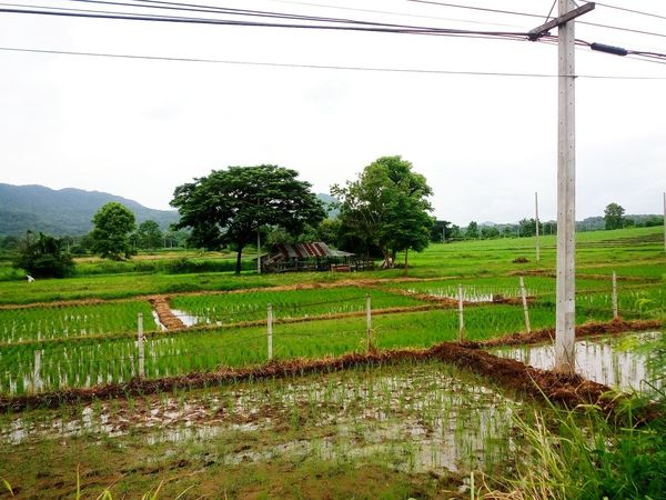 Farmers Life Natural Beauty Farmer Style Thai Farmer Rice Fields  Hometown Home Is Where The Art Is