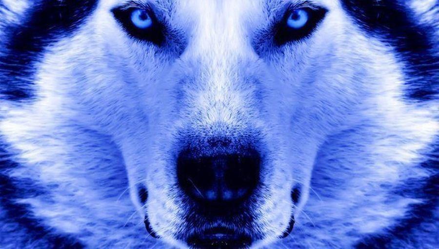 Wolf Wolf Soul