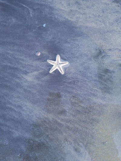 Starfish  Star Shape Outdoors Shore Sea Life Seashore Seashore Photography Starfish Hunting StarfishBeSoCute Mobilephotography EyeEmNewHere