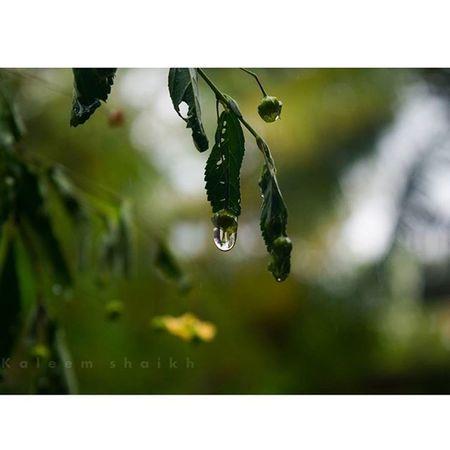 Sudden rain in belgaum!!!! ❤❤😍😍 Sudden Rain Drops Raindrops Love Belgaum  Instagram Inatagramhub Instagood Instacool Instamood Picoftheday Photooftheday Leaf Drop_perfection Myindiacnn CNN @cnn Macro_brilliance Nature_brilliance Myblr