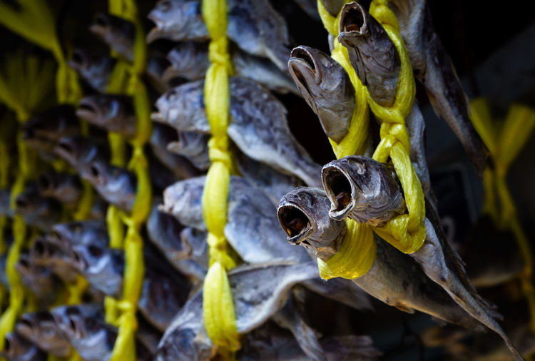 Close-Up Of Dead Fishes Hanging From Yellow Rope