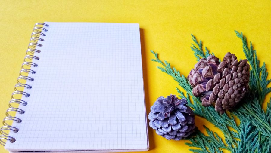 High angle view of spiral notebook by pine cones against yellow background