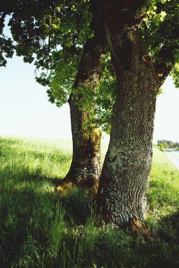 Tree trunk on field against sky