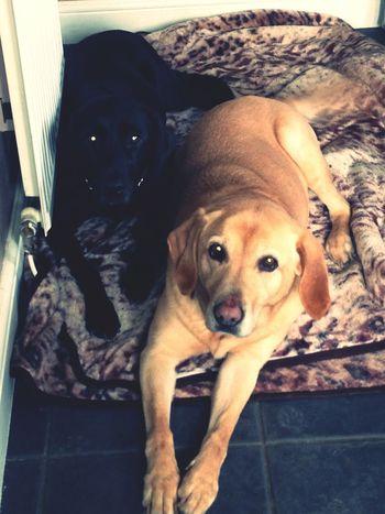 Puppies(: