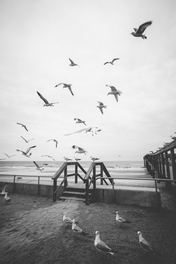 Animal Themes Animal Wildlife Animals In The Wild Beach Beach Life Beach Photography Bird Black & White Black And White Blackandwhite Cinematic Photography Day Flock Of Birds Flying Large Group Of Animals Monochrome Nature No People Outdoors Seagull Sky Spread Wings Zoology B&W Magic
