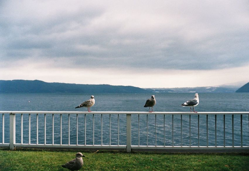 Toyako birds My Year My View From My Point Of View My Traveling Photography Japan Toyako Bird Sky Cloud - Sky Animal Themes Tranquility Beauty In Nature No People Animals In The Wild Film Photography Leica M6 Leicacamera EyeEm Best Shots Film