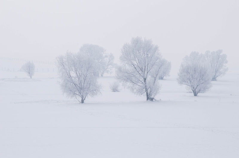 Cold Temperature Winter Snow Beauty In Nature Tree Tranquil Scene Scenics - Nature Tranquility Plant White Color No People Field Covering Bare Tree Environment Isolated Nature Land Day Snowing Sky