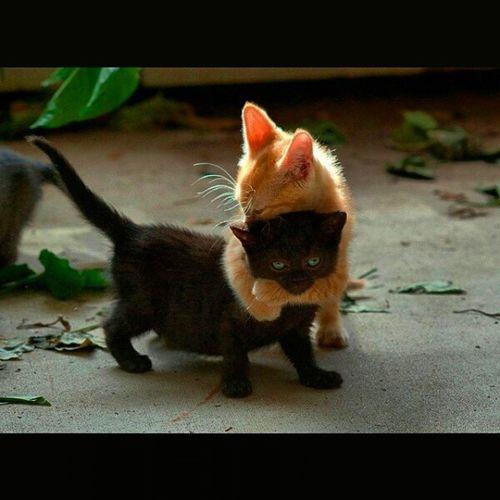Не могла не выложить такую милоту))) ИзИнета котятки котята Обмнимашки МимимишностьЗашкаливает Мимими КотоОбмнимашки CatLovers Beautyful Kittens kissekatt Kitty Catty KittyCat BeautyfulCats GingerCat BlackCat SquareInstaPic
