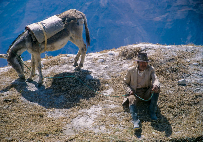 Farmer With Donkey Sunlight Elephant Outdoors Domestic Animals People Men Ecuador Sierra Alausi Indigenous