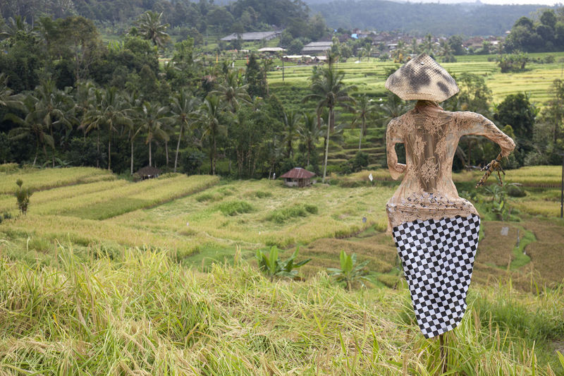 Jatiluwih Rice Terrasce Jatiluwih Rice Terrace Agriculture Animal Beauty In Nature Day Environment Field Grass Green Color Growth Land Landscape Manaquin Nature No People Outdoors Plant Rural Scene Scenics - Nature Tranquil Scene Tranquility Tree