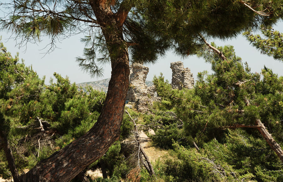 Antakya Kale Antakya Antakya Castle Castle Hatay Antakya HatayTurkey Historical Sights Sky And Clouds Turkey Beauty In Nature Branch Forest Fortress Green Color Growth Hatay  Historic Kale Nature Outdoors Plant Scenics Tranquility Tree Tree Trunk