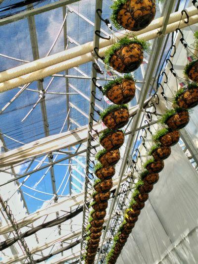 Colorful Urban Spring Fever Flower hanging basket hanging flower basket coco plants nursery spring Cellphy