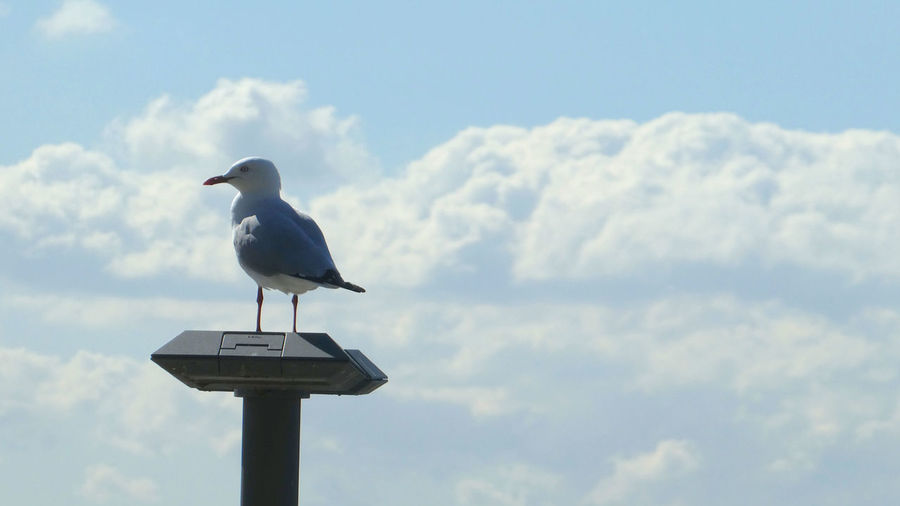 Low angle view of seagull perching on a bird