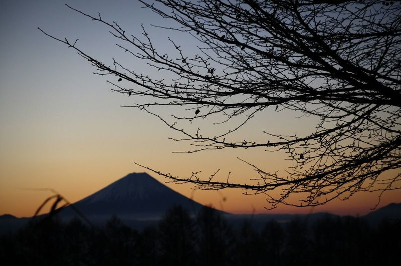 Beauty In Nature Tree Mountain Open Edit OpenEdit Snapshot Mt Fuji, Japan Mt. Fuji Mt.Fuji Mt Fuji Mtfuji Japan Japan Photography Morning Morning Light Morning Sky