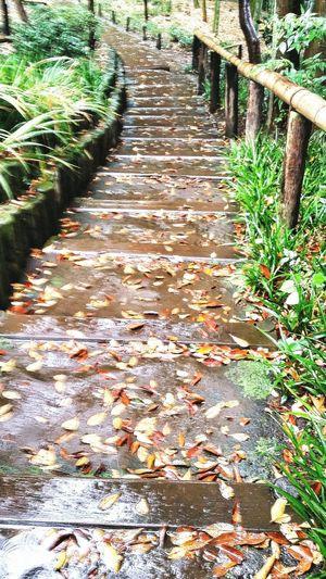 Steps Path Rain Wet Tonogayato Garden Urban Nature Tokyonature Tokyo Japan Travel Photography Place Of Scenic Beauty