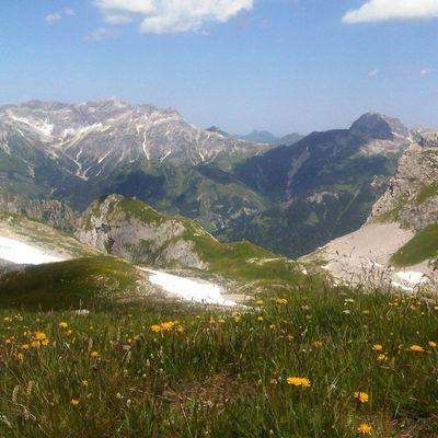 Alps Alpen Austria Licht Und Schatten Light And Shadow Wiese  Wiesenblume Schnee Snow Berge Mountains