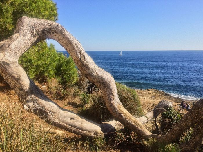 Sea Nature Scenics Tranquility Beauty In Nature Tranquil Scene Water Outdoors Non-urban Scene Clear Sky Sunlight Tree Côte D'Azur Mediterranean  EyeEm Landscape Landscape_Collection EyeEm Nature Lover Wood - Material Wooden Lost In The Landscape