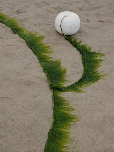 Buoy on sand at beach